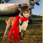 #SuperHéroes19 se compromete con los animales